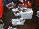 pesce toscano peschereccio