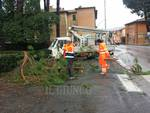 Maltempo: ramo caduto a Bagno