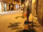 Palme tagliate vandali in centro