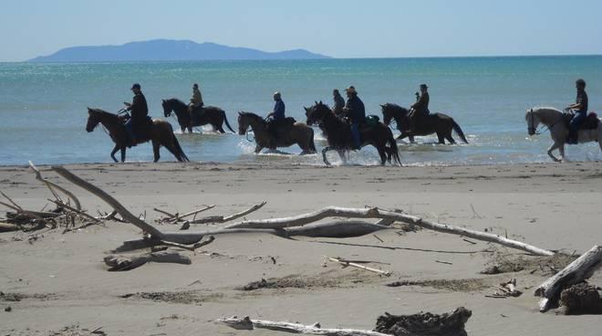Cavalli Parco della Maremma