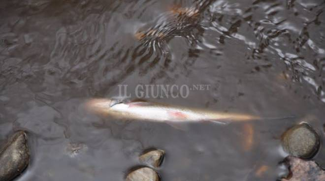 Moria di pesci inquinamento fiume Bruna