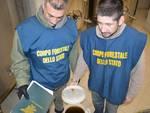 Operazione olio contraffatto Forestale