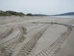 Pulizia spiaggia Orbetello
