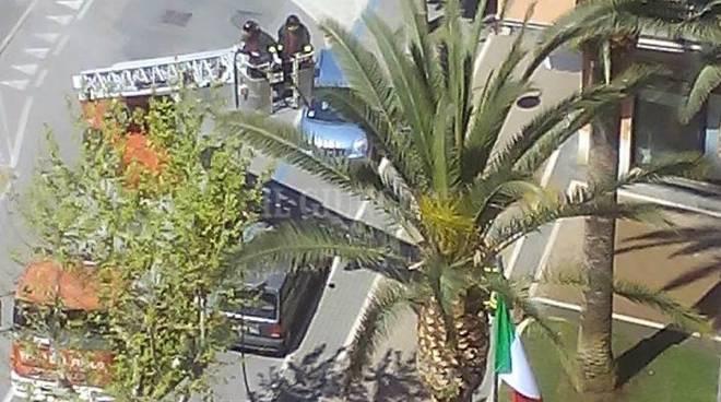 Vigili spengono palma
