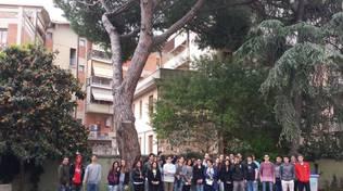 Abbattimento alberi a scuola