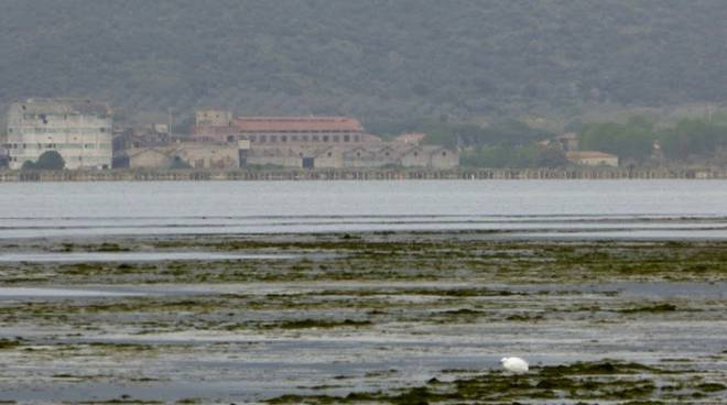 Alghe Laguna
