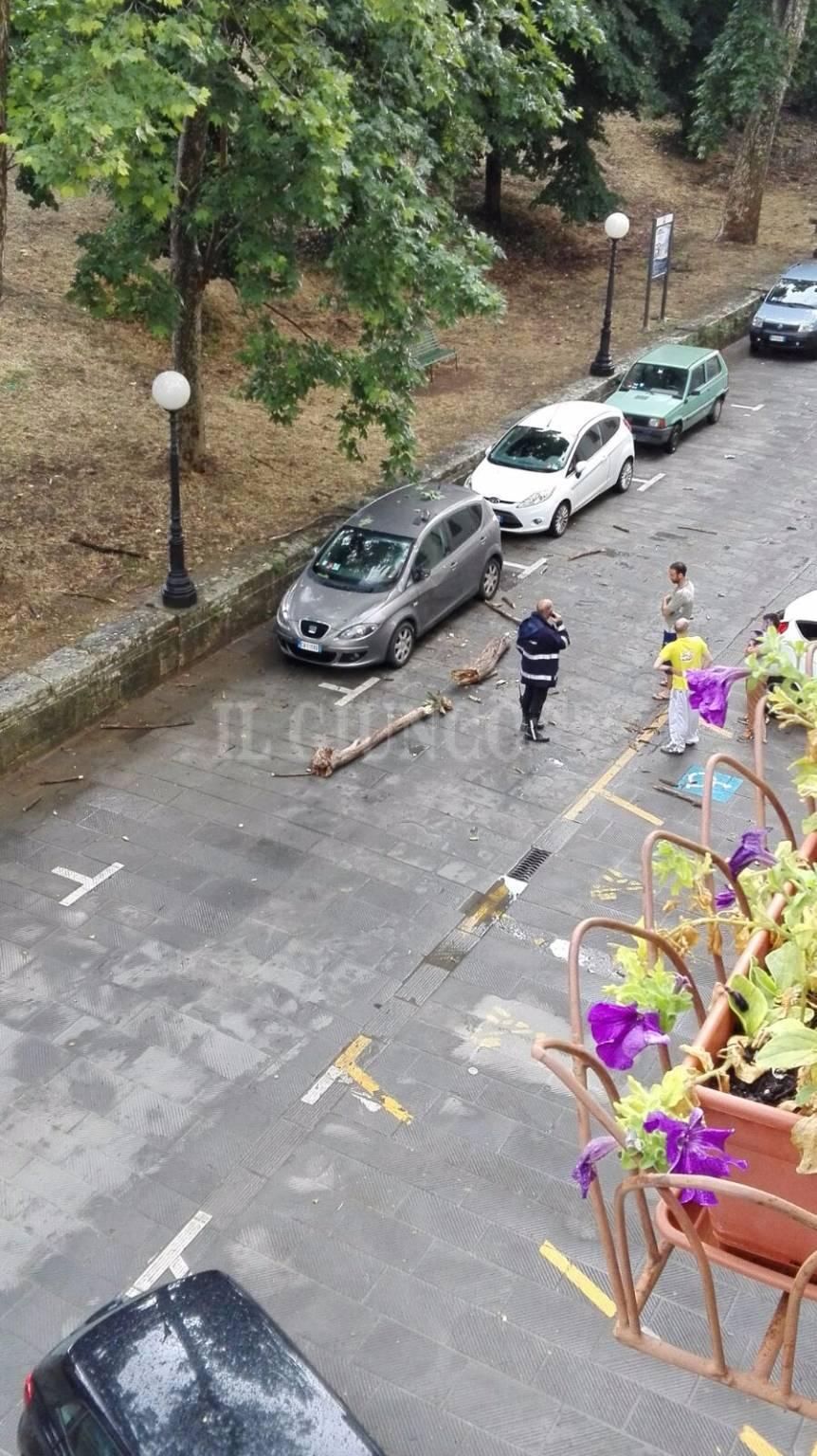 Albero cade su auto in via Saffi