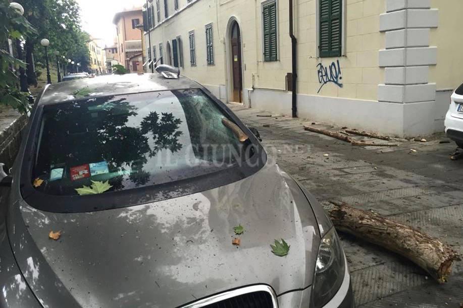 Albero cade su auto via Saffi