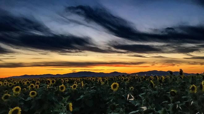 tramonto maremma girasoli