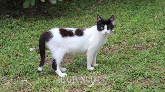 Raid in colonia felina a Follonica, gatto ucciso a bastonate