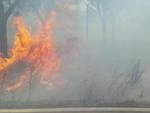 Incendio Rispescia