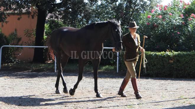 Festival cavallo Casalone