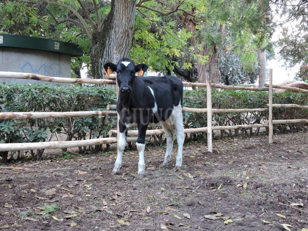 Gustatus Animal Farm 2016