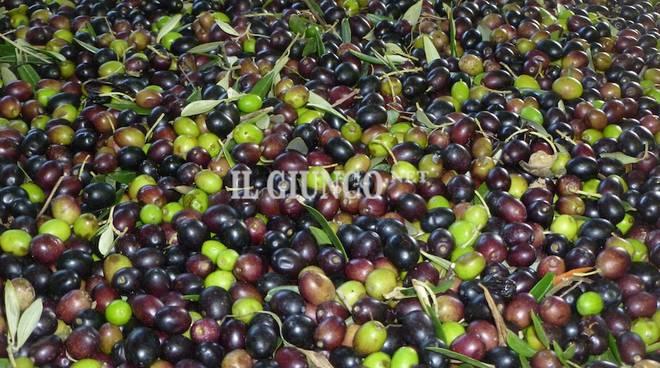 Olio olive
