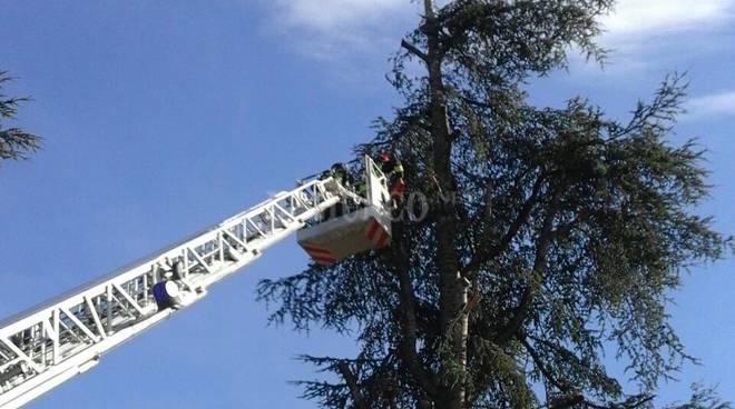 albero pericolante vvf