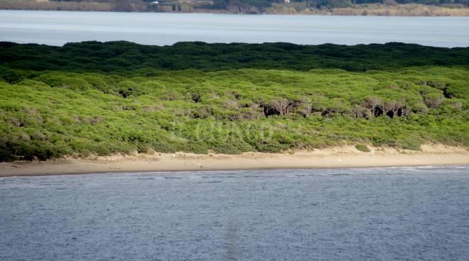 La laguna, il mare, la pineta: Tombolo della Feniglia