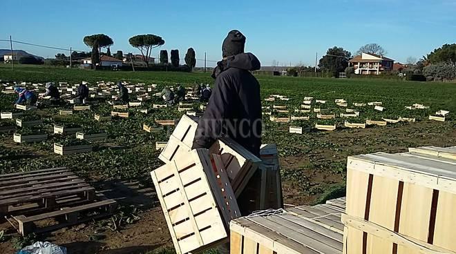 stranieri agricoltura campagna spinaci immigrati