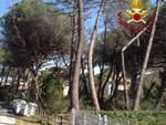 Albero pericolante a Principina 14 marzo 2017