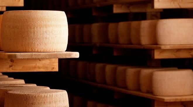 formaggio il fiorino roccalbegna