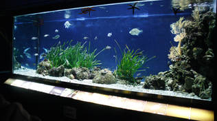 acquario monte argentario