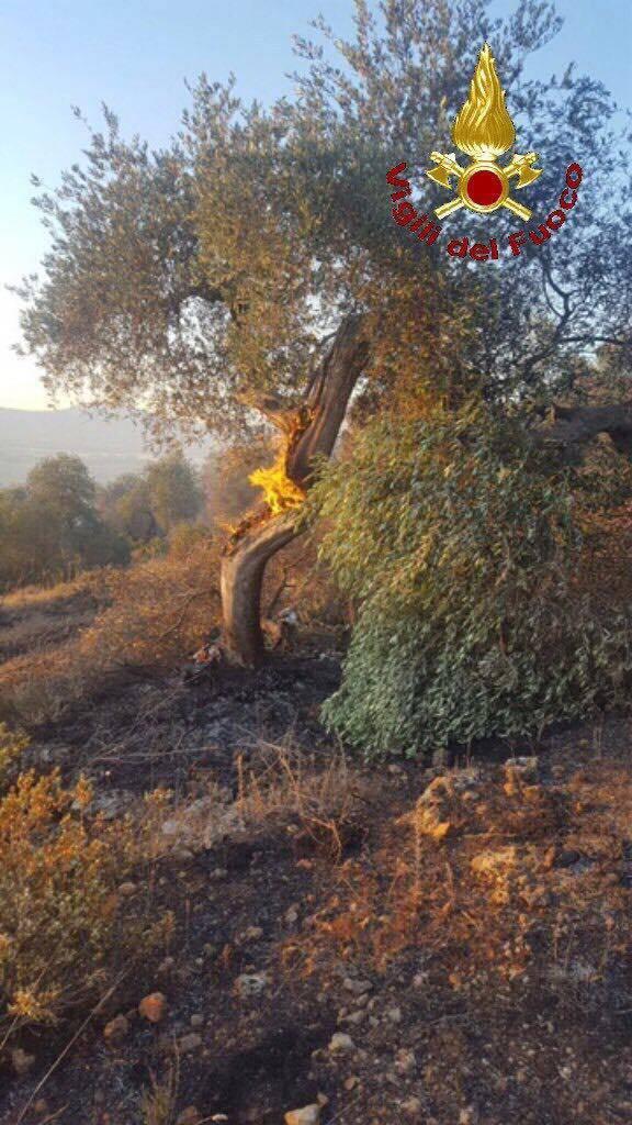 incendio sticciano scalo 12 giugno 2017