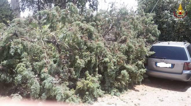 Maltempo: rami piante e alberi sulle auto giugno 2017