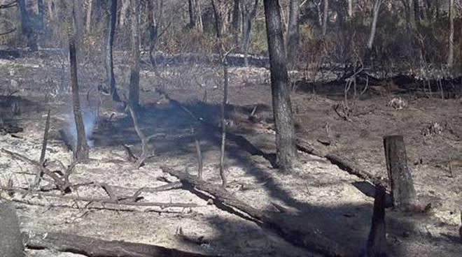 incendio bruciato piante carbonizzate