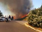 incendio castiglione 14 luglio 2017
