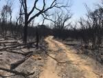 Bosco bruciato Pietratonda