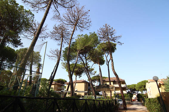 Degrado pineta Marina
