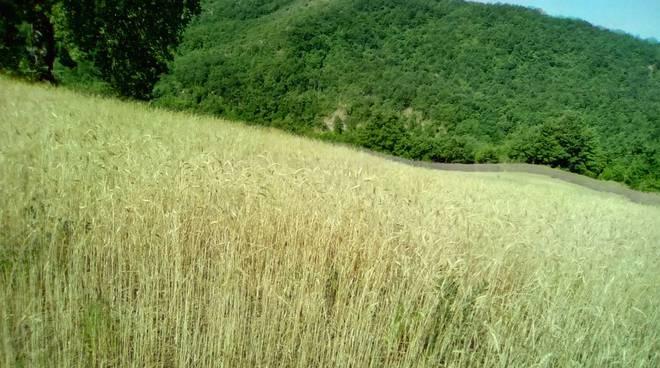 antiche sementi grano