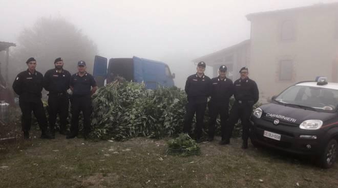Piantagione marijuana 2017