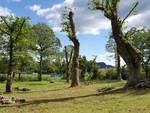 castagni potati parco della Faina