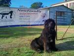area sgambamento cani Newfoundly AiCS Bagno di G.