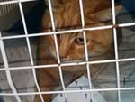 salvataggio gatto 2017