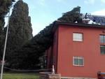 Albero sul Cemivet