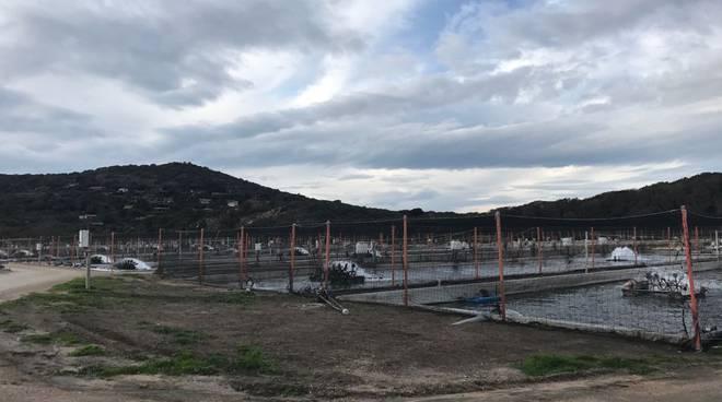Acquacoltura Ansedonia 2018