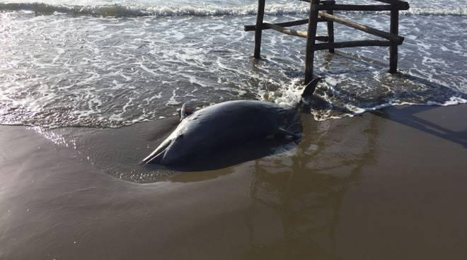 delfino morto 31/3/18