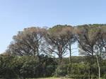 Sommozzatori rimuovono tronchi