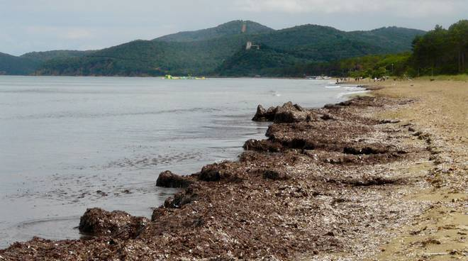 spiaggia alghe