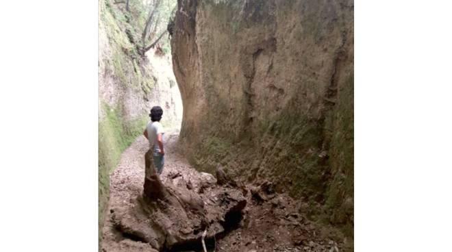 Via cava tronco