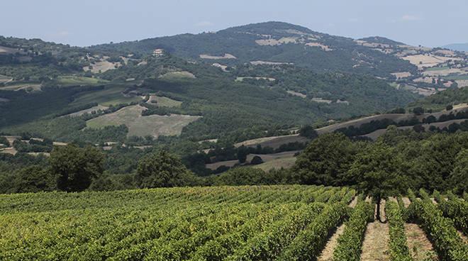 Vigne Morellino