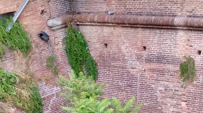 Degrado Arcieri mura, interrogazione Pd/Mascagni