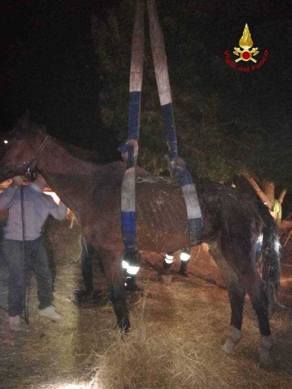 cavallo sdraiato