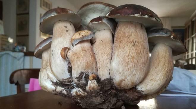 Funghi Porcini record ottobre 2018