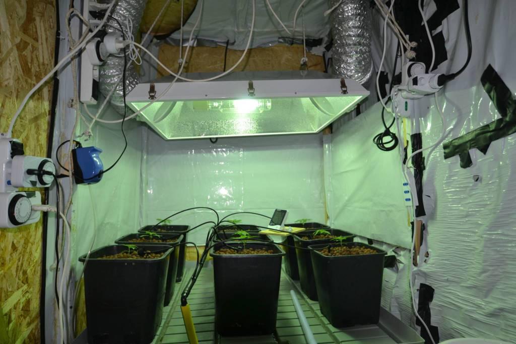 Marijuana coltivazione in casa