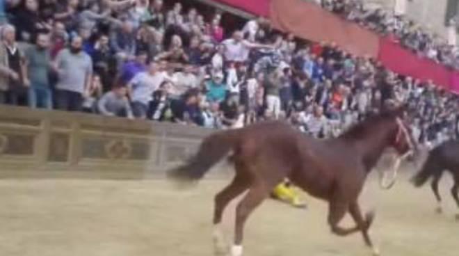 palio di siena 20 ottobre 2018 cavallo morto