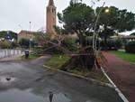 albero cade sulla ciclabile