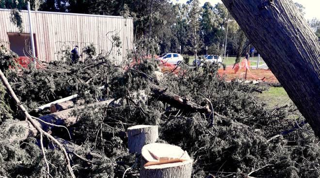 Cipressi abbattuti parco centrale