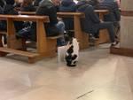gatto in chiesa